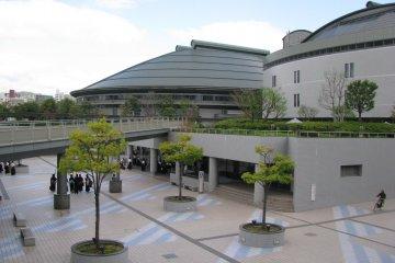 Зелёная арена