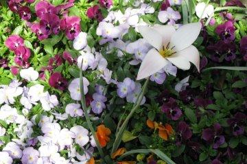 ...и других весенних цветов
