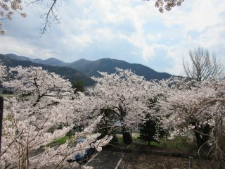Вид онсэна Юданака с цветущими сакурами