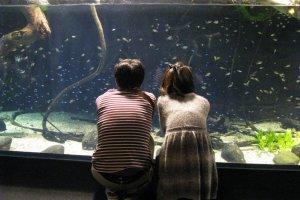 Aquariums are popular places for romantic dates