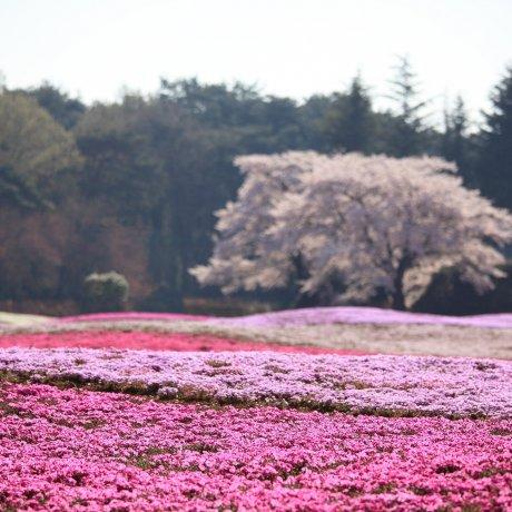 Tobu Treasure Garden