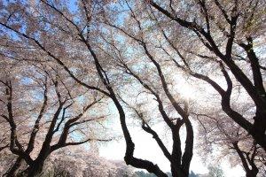 Springtime beauty at Tobu Treasure Garden