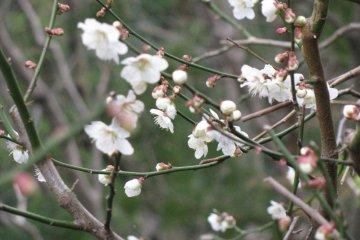 Очарование ранней весны