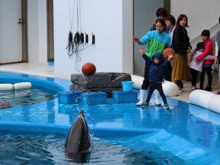 Playing ball with dolphins at the Umino Mori Aquarium, Sendai