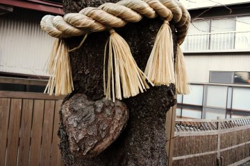 A tree with heart