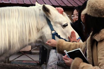 Friendly white horse