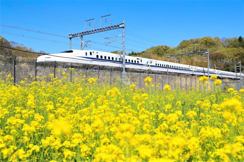 Take the frequent and silky smooth service between Tokyo and Osaka, via Shin Yokohama, Nagoya and Kyoto