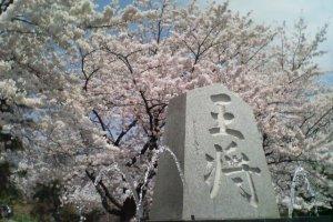 Tendo Sakura Matsuri