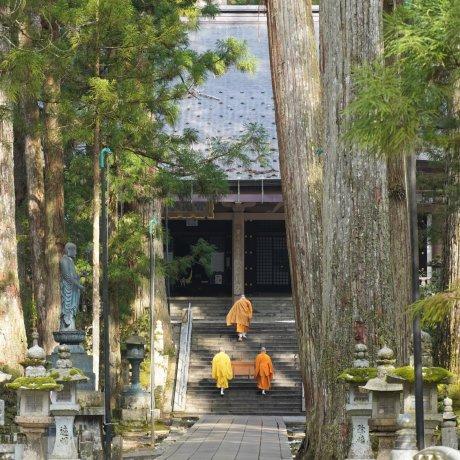 The Sweet Soul of Wakayama