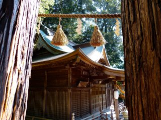 Looking out from between the holy cedars (Kodakara-no-sugi)