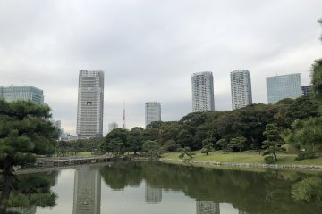 Hamarikyu Gardens - an oasis in the middle of the city.