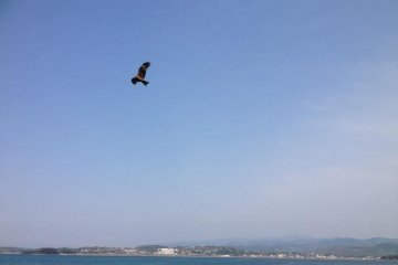 Eagles soar over the island