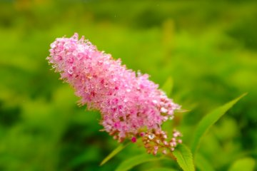 漫步中遇見的季節花卉之一