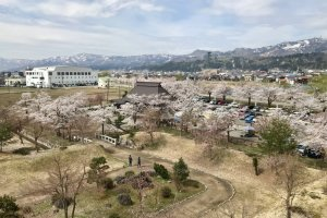 Some of the sakura trees from up high