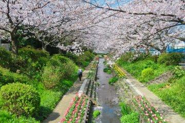 Egawa Sakura and Tulips