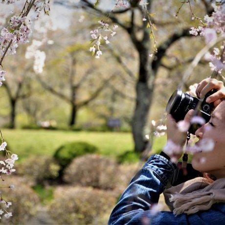 Aula de Fotografia num Jardim Japonês
