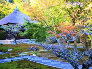 View of Kannon-Do within the temple grounds