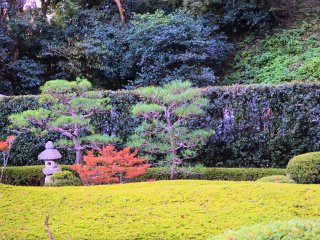 Garden within the temple grounds