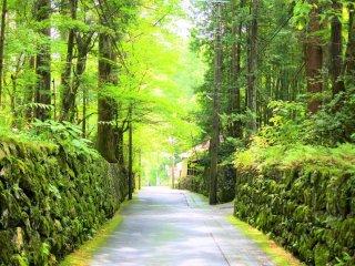The lovely green of Nikko
