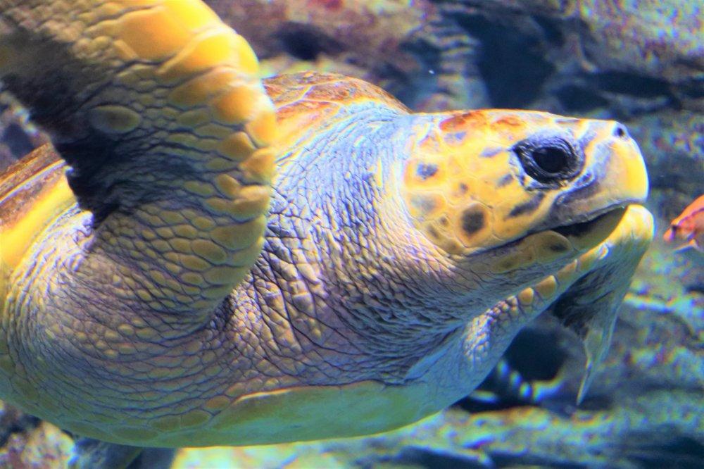 A sea turtle