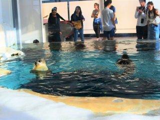 The seal pool