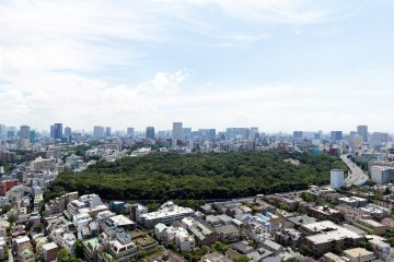 Tokyo's Natural Monument and Historic Site