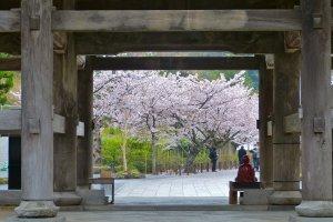 Depois de passar pelo grande Portão San-mon, olhe para trás