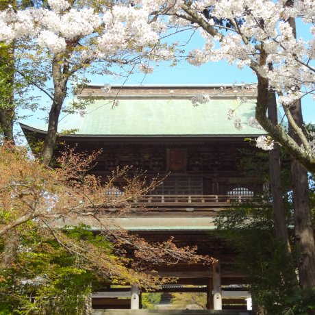 Kamakura Engaku-ji Temple in Spring