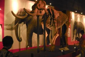 Do you know the difference between an elephant and a mammoth?