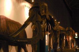 True-size skeletons