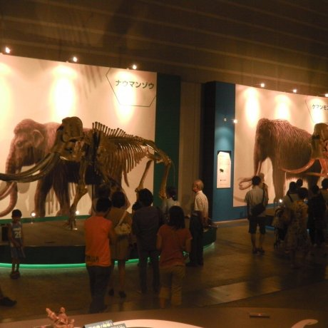 Yuka: Woolly Mammoth Exhibition in Yokohama