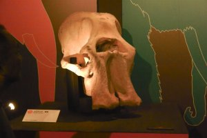 The skull was almost perfectly preserved