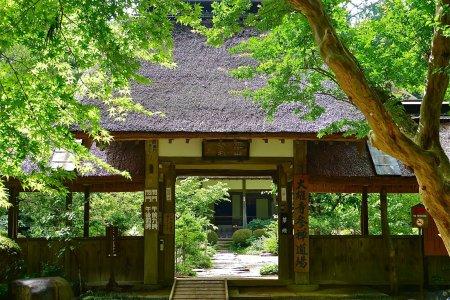 栃木 大雄寺の夏