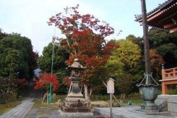 寺庙前的红叶