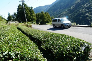 Tee plantations in the highlands of Fukui