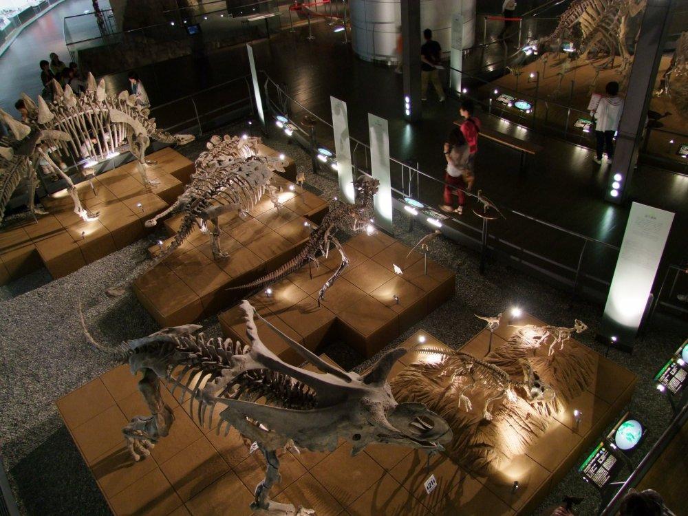 Museum Dinosaurus Fukui - Fukui - Japan Travel