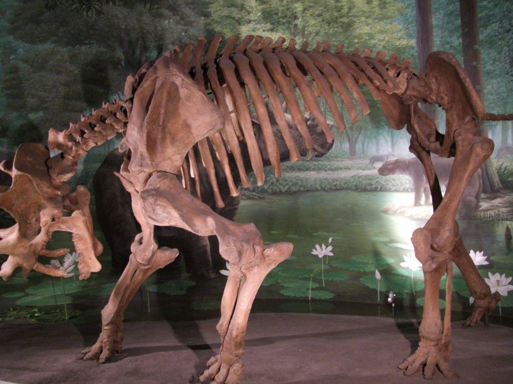 Estes dinossauros têm uma cara assutadora!