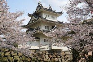 Tsu Castle Park in springtime