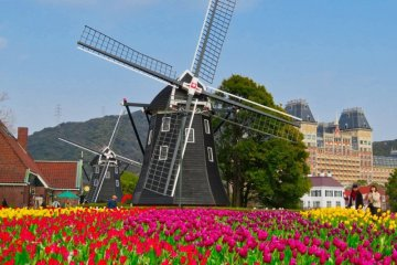 Colorful tulips and windmills at Huis Ten Bosch