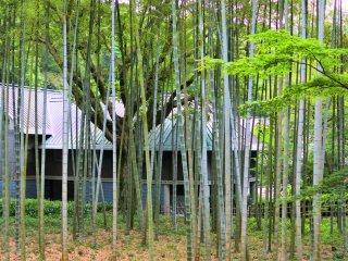 竹林の景色