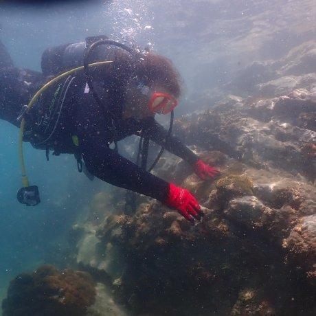 在串本町来一场水肺潜水