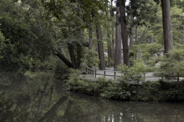 Forest surrounding the Geku
