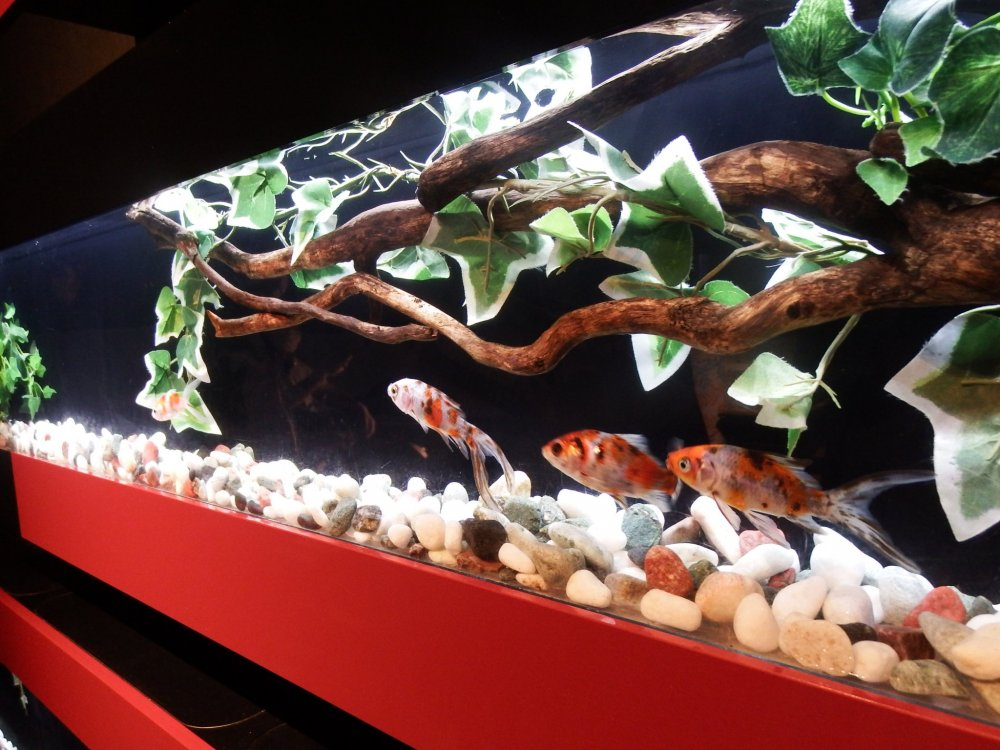The Zen Aquarium at the entrance sets the mood