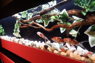 The Zen Aquarium at the entrance sets the mood