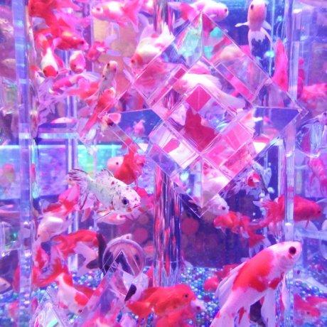 ART AQUARIUM MUSEUM Opens in Tokyo