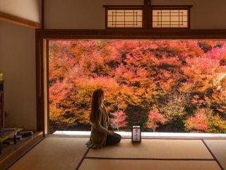 Warna-warni yang menakjubkan dari doudan-tsutsuji (enkianthus)