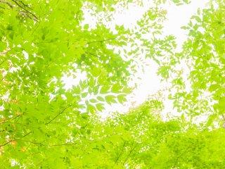 樹々の翠がとてもまぶしい