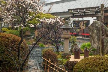 Красивый сад во время весеннего дождика
