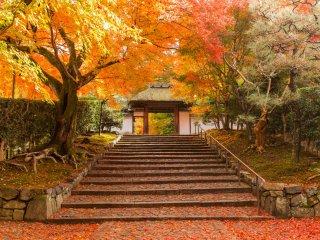 Кленовые листья, разбрасываемые ветром, устилают каменные ступени.