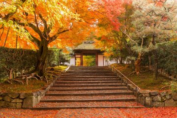 Осенняя листва в Анраку-дзи